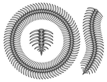 Centipede skeleton vintage pattern brush concept in monochrome style isolated vector illustration