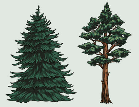 Conifer trees colorful vintage concept