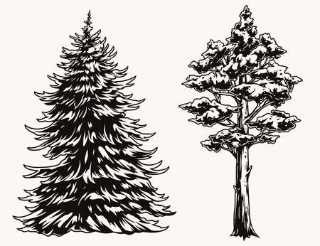 Fir and pine trees vintage template Stock Illustratie