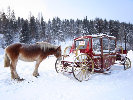 Horse sleigh on the snow land