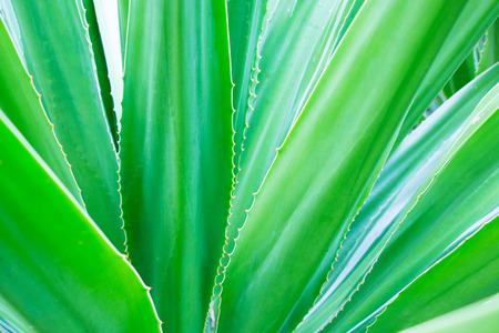 Cactus Leaf Pattern photo