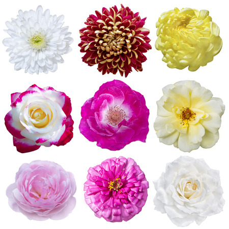 Selection of Various Flowers Isolated on White Background photo
