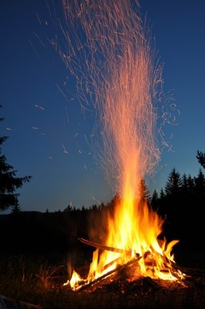 campfires: campfire in the forest
