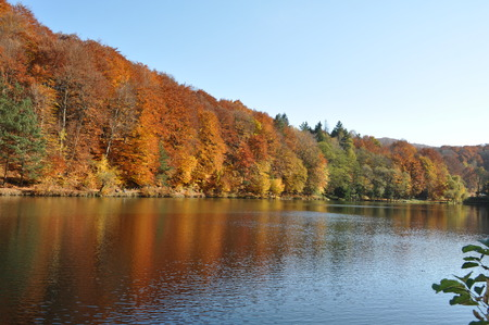 autumn colorful trees reflecting in the lake water  Standard-Bild
