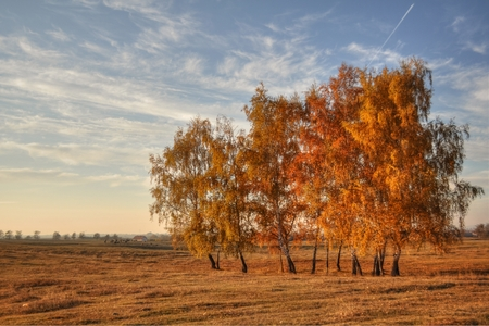 birch tree with blue sky, autumn landscape, HDR