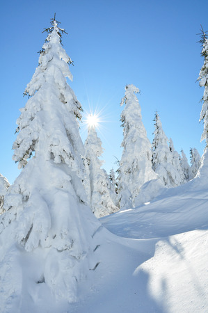 Frozen trees in the Carpathian mountains, Romania Standard-Bild