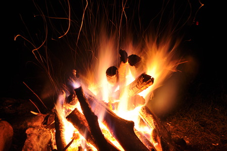 Campfire, bonfire in the forest  Standard-Bild