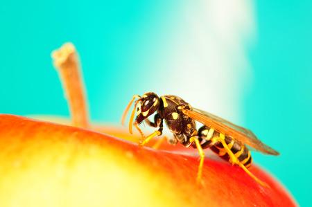 sponger: Hornet, Bee on apple