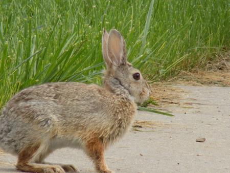 jack rabbit: Jack Rabbit
