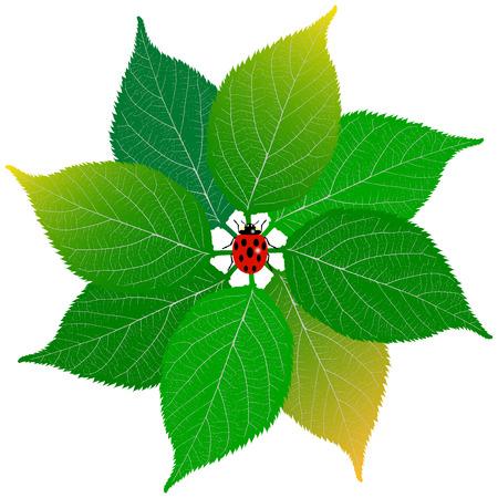 ladybug: Green leaf with ladybug on white background Illustration