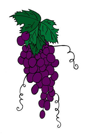 An illustration of a bunch of purple grapes, isolated on a white background.