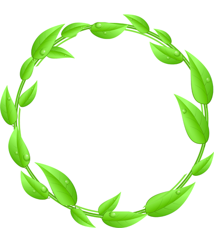 Round,circle made of green leaves with white text space isolated on a white background photo