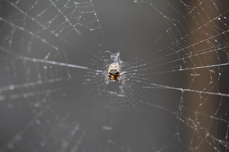 meshed: Building spider web on tree Stock Photo