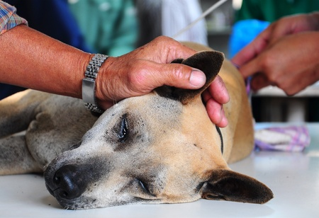 dog under anesthesia photo