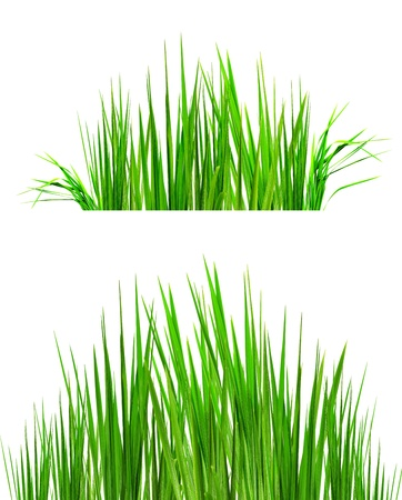 two backgrounds of green grass useful for photo retouch
