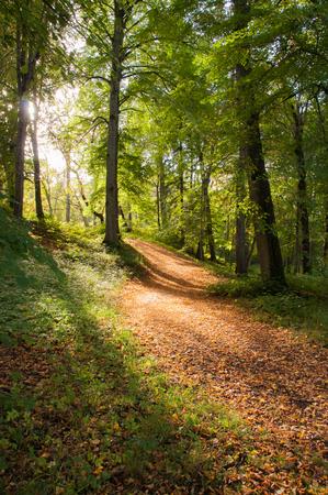Erstaunliches goldenes Sonnenlicht, das durch Bäume kommt und einen Herbstwaldweg aufhellt.