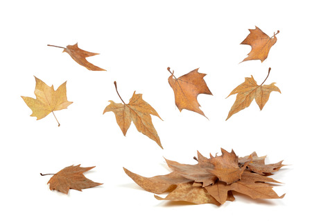 autumn leaves falling: Autumn leaves falling