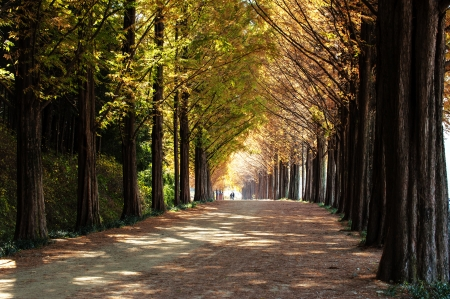 韓国、ナミの美しい風景島林道」