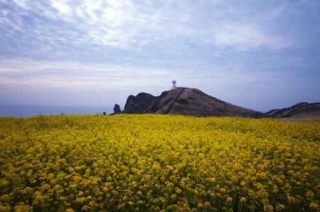Seongsan Sunrise Peak beautiful Jeju Island in South Korea rape Stock Photo