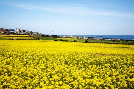 美しい韓国・済州島 写真素材