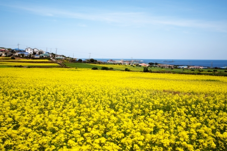 Beautiful Jeju  Island in South Korea photo