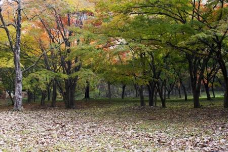 Beautiful landscape in South Korea,Naejangsan autumn landscape photo