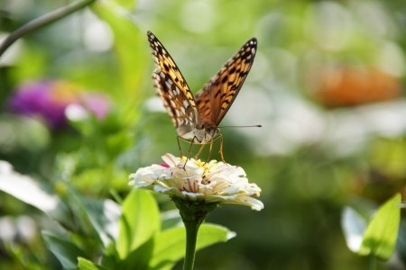 Beautiful flowers and butterflies photo