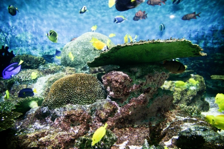 Tropical Fish Aquarium photo