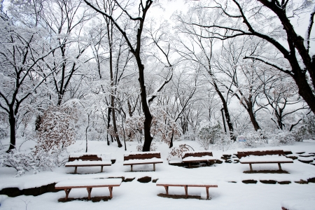 Bench  south korea,Changgyeong  photo