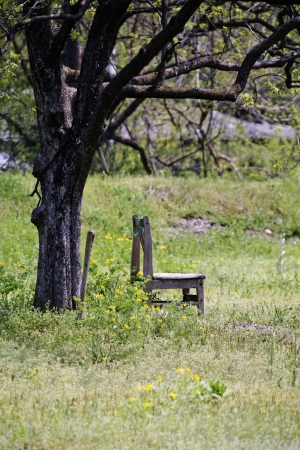 Trees and chairs photo