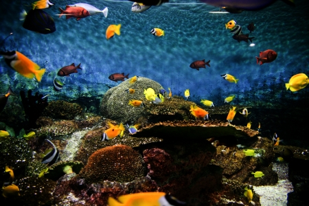 Tropical Fish Aquarium photo