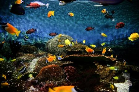 Tropical Fish Aquarium Stock Photo - 23903134