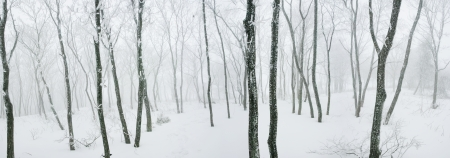 Beautiful winter landscape in south korea Daegwallyeong' sheep ranch' photo