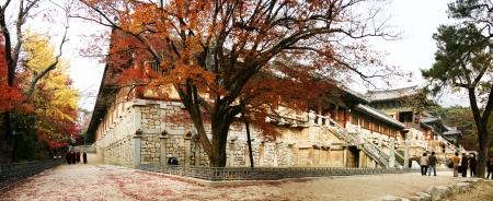 美しいプルグクサと秋の風景韓国のお寺」
