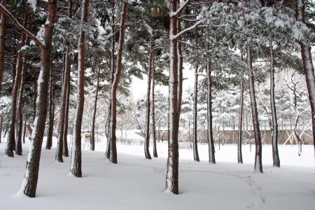 gyeongbokgung: Winter trees in South Korea Gyeongbokgung Palace