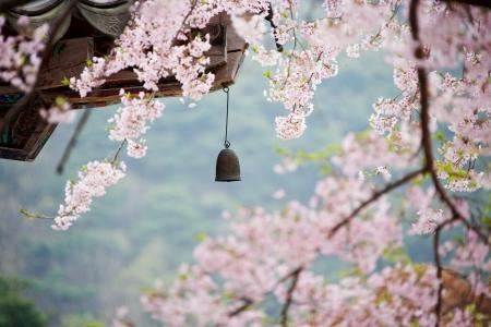 美しい梅の花の種