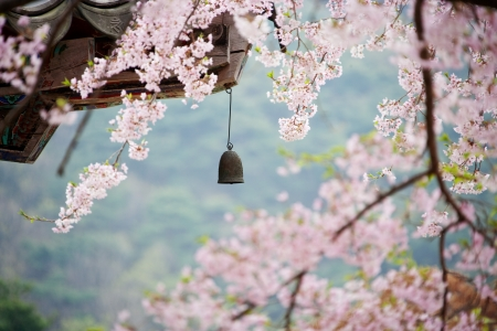 And the kind of beautiful plum blossoms Stock Photo