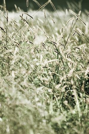 wild grass: Flores silvestres