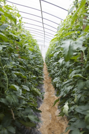 crops in south korea,Greenhouses  photo
