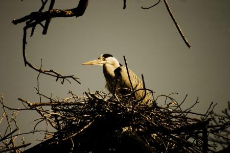 migratory: Migratory cranes Stock Photo