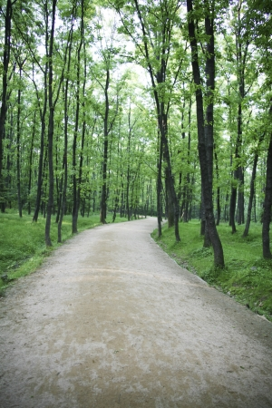 Beautiful landscape in South Korea,Nami Island Forest Road photo
