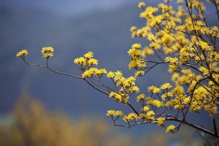 Beautiful landscape in South Korea,Cornus officinalis town, Gurye Stock Photo