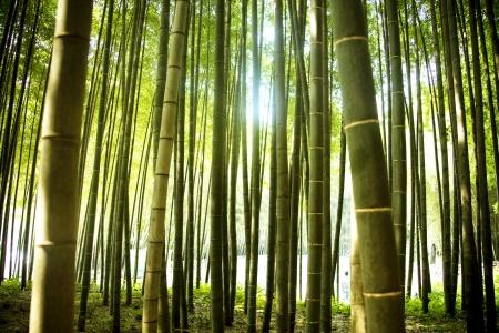 "paisaje naturaleza: Hermoso bosque de bamb� en Corea del Sur Damyang """" Foto de archivo"