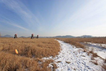 Beautiful winter landscape ecology park in south korea,SORE'' photo