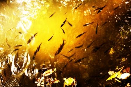 koi pond: Koi pond autumn landscape