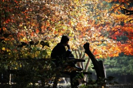 Beautiful landscape in South Korea,Nami Island autumn landscape photo
