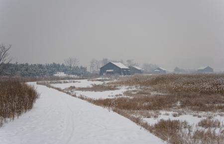 Beautiful winter landscape ecology park in south korea,SORE photo