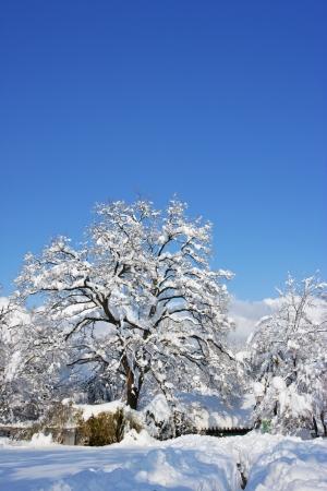 storied: Beautiful landscape in South Korea,Lou snowy jukseok