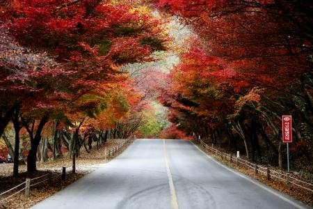 Fall foliage road Stock Photo