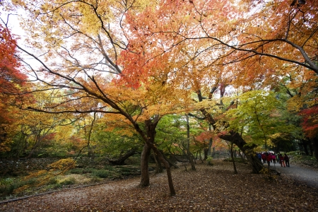 Autumn landscape with temples in south korea, seonunsa'' photo